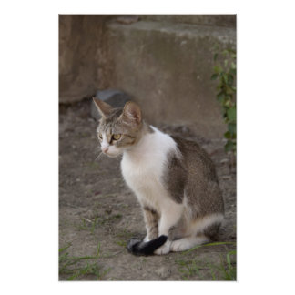 Romania, Transylvania, Sighisoara. Pet cat. Photo Print