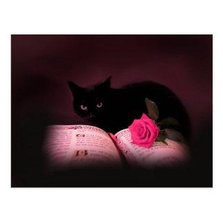 romantic cat book rose postcard