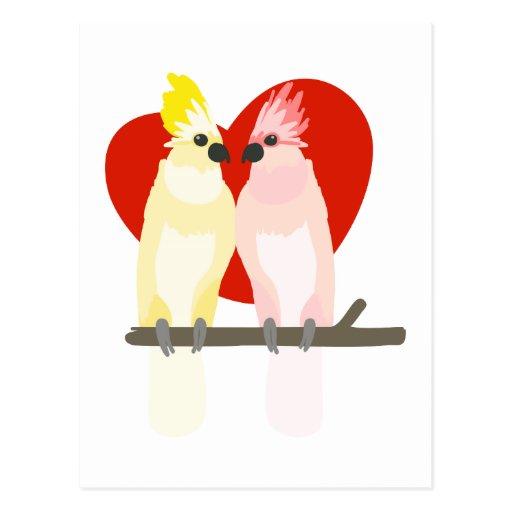 Romantic Cockatoos Post Card