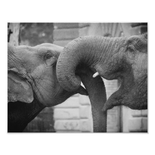 Romantic Elephants Photograph, Black and White Poster