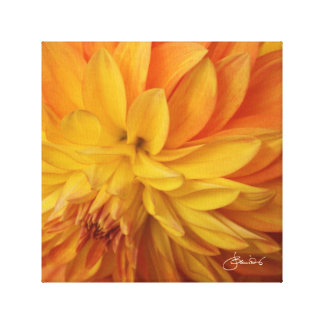 Romantic golden yellow dahlia stretched canvas print