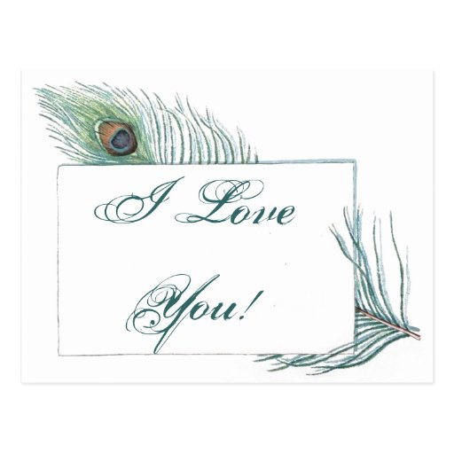 Romantic Love Quote Inspirational Peacock Post Card