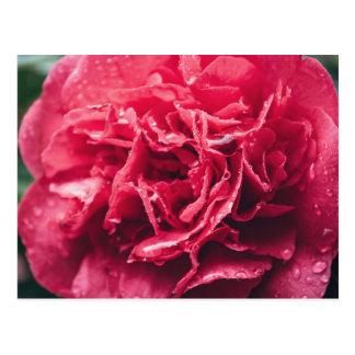 Romantic Pink Flower Closeup | Postcard