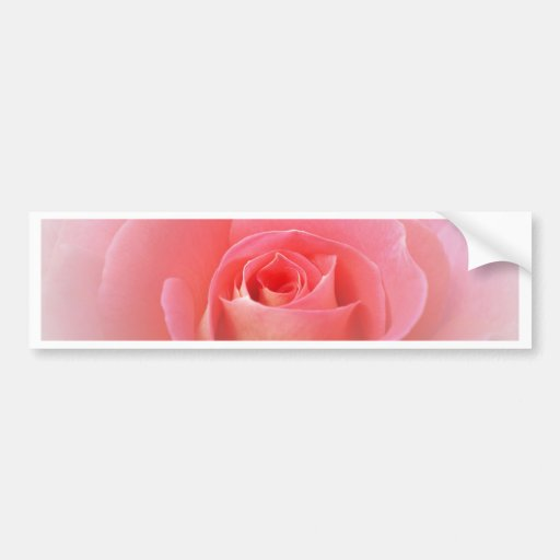 Romantic Pink Rose Bumper Stickers