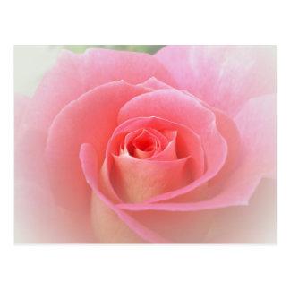 Romantic Pink Rose Post Card