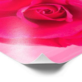 Romantic Red Pink Rose v2 Photo Art