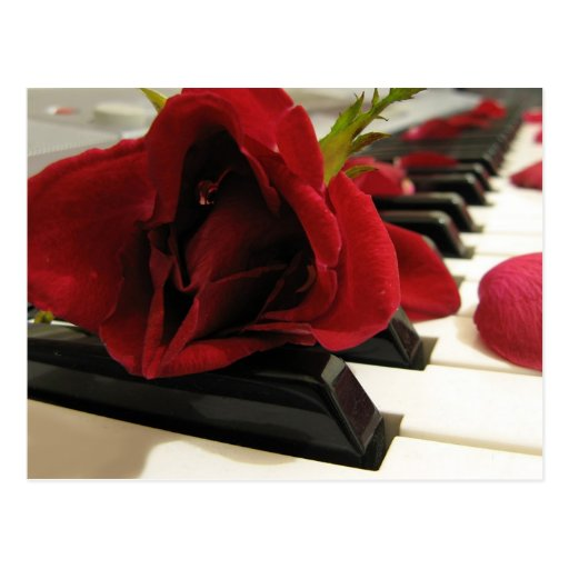 Romantic Red Rose Love Post Cards