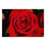 Romantic Red Rose Photographic Print