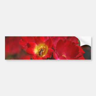 Romantic rose and meaning bumper sticker