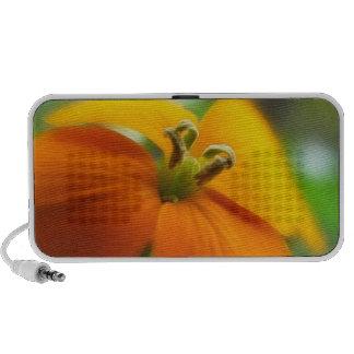 Romantic Siberian Wallflower Bloom iPod Speakers