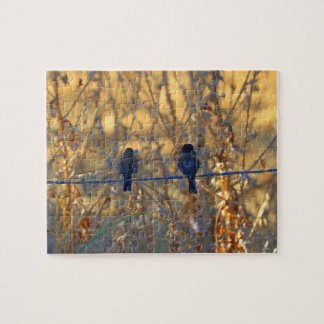 Romantic sparrow bird couple on a wire, Photo Puzzles