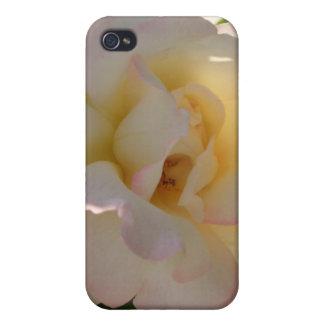 Romantic White Rose CricketDiane iPhone 4/4S Case