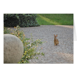 """Romeo"" Rabbit Greeting Card"