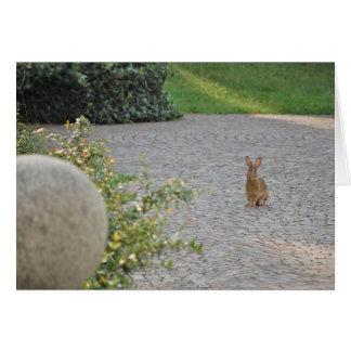 """Romeo"" Rabbit Greeting Card"