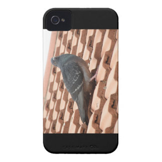 Rooftop Pigeon Blackberry Bold Case