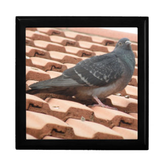 Rooftop Pigeon Gift Box