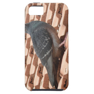 Rooftop Pigeon iPhone 5 Case