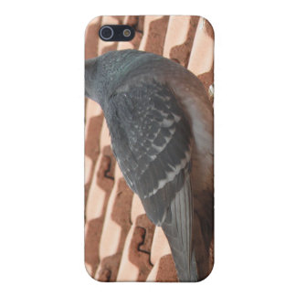 Rooftop Pigeon  iPhone 5 Cover