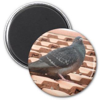 Rooftop Pigeon Magnet