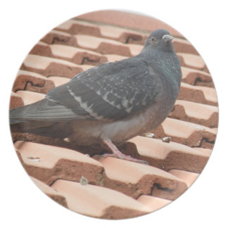 Rooftop Pigeon Plate
