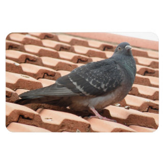 Rooftop Pigeon Premium Magnet