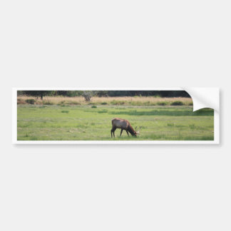 Roosevelt Elk, Oregon Bumper Sticker