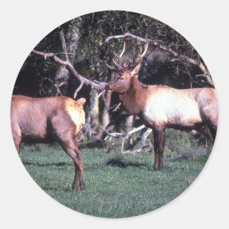Roosevelt Elk Round Sticker