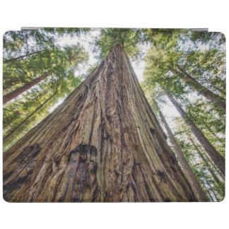 Roosevelt Grove iPad Cover