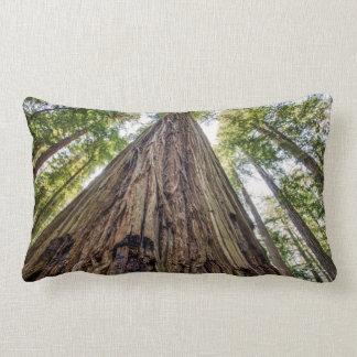 Roosevelt Grove Lumbar Cushion