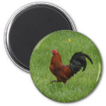 Rooster 1 - magnet
