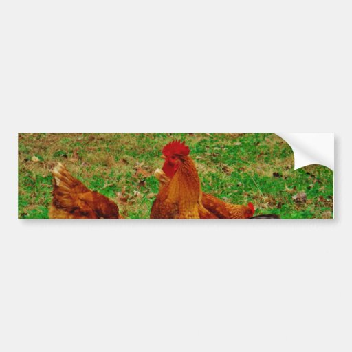 Rooster  and his chick bumper sticker