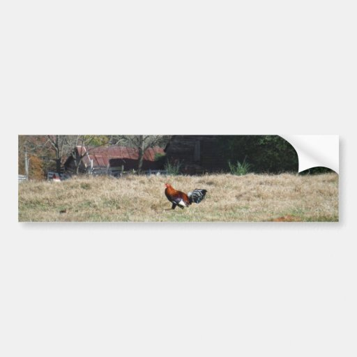 Rooster at the Farm Photo by Sandy Closs. Bumper Sticker
