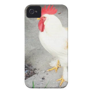 Rooster Case-Mate iPhone 4 Case