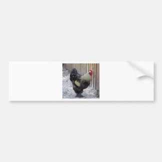 Rooster Chicken Painting Bumper Sticker