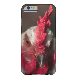 Rooster close up portrait barely there iPhone 6 case