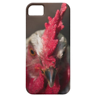 Rooster close up portrait iPhone 5 covers