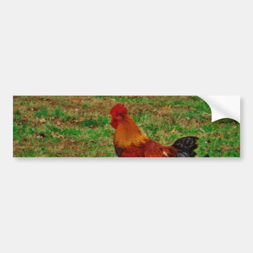 Rooster Facing Left Bumper Stickers