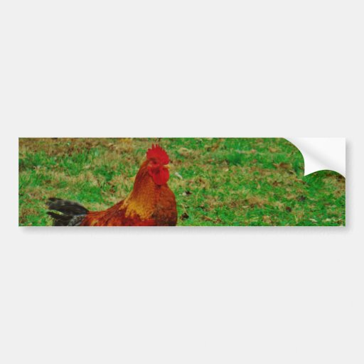 Rooster Facing right Bumper Sticker