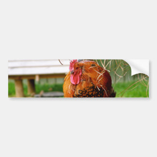 Rooster Farm Animals Nature Photography Bumper Sticker