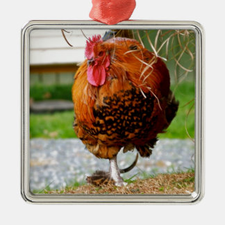 Rooster Farm Animals Nature Photography Ornaments
