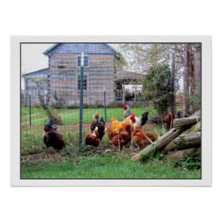 Rooster Farm Poster