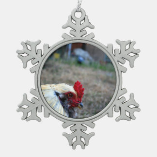 rooster foreground photo farm poultry bird animal ornaments