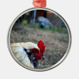 rooster foreground photo farm poultry bird animal ornament