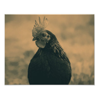 Rooster in Sepia Poster