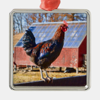 Rooster in the barnyard Silver-Colored square decoration