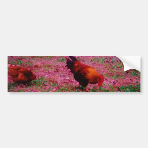 Rooster in the Purple Grass Bumper Stickers