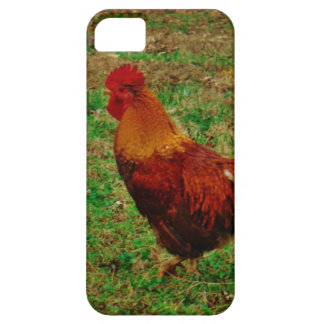 Rooster in the Yard iPhone 5 Covers
