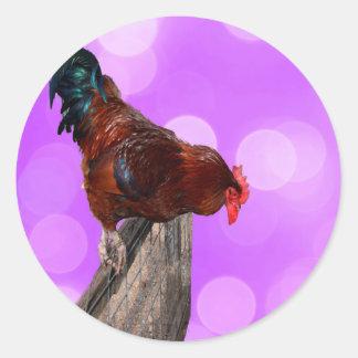 Rooster Nosy Parker, Round sticker