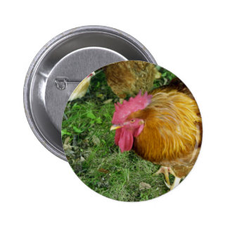 Rooster on the Prowl 6 Cm Round Badge