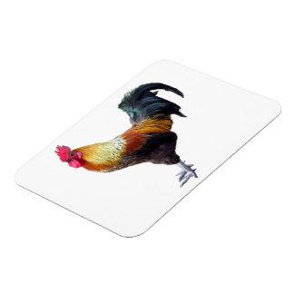 Rooster Plain Premium Magnet (2) sizes
